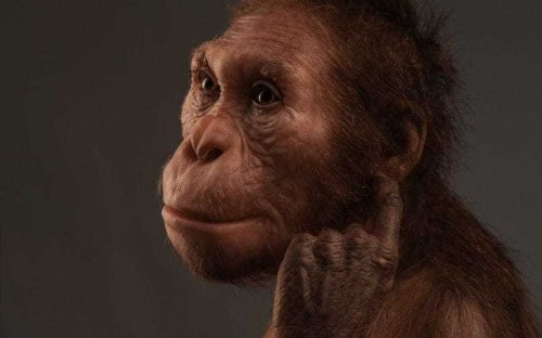 Human family tree gains new member as scientists confirm 'missing link'
