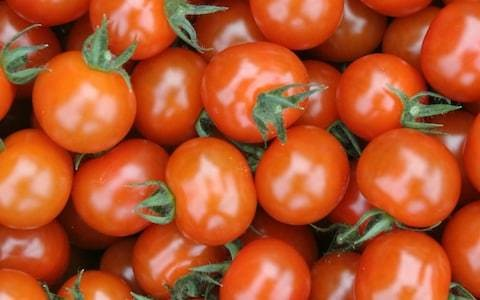 End of tasteless tomatoes as scientists discover long-lost 'flavour genes'