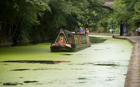 Duckweed: why the bane of pond owners is set to become a superfood