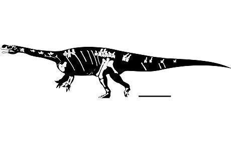 New Aardonyx celestae dinosaur discovered in South Africa