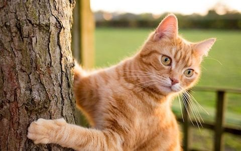 Parasite spread by cats drives entrepreneurial brilliance in humans
