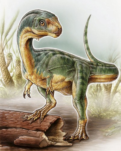 Vegetarian T-Rex the size of a turkey discovered