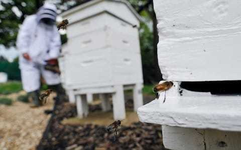Turkish bee brought into Britain in family's luggage must be destroyed, say Government officials