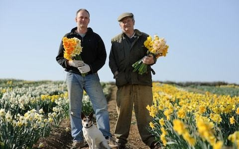 14 RHS golds and still going strong: the father-and-son doyens of daffodils on how they became 'Master Growers'