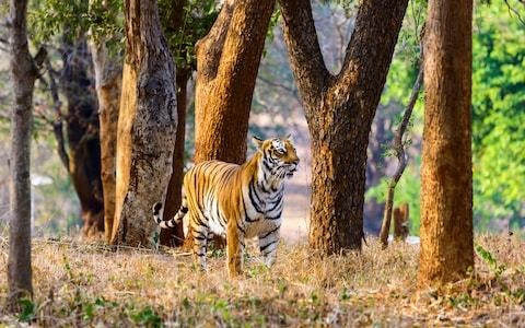 In search of Jim Corbett's India, a land of pink gin and man-eating tigers