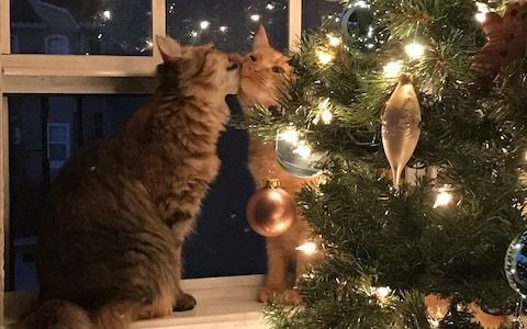 These kittens and their Christmas love are cheering up people on Twitter