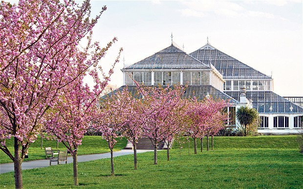 The best trees for spring blossom, nature's own confetti