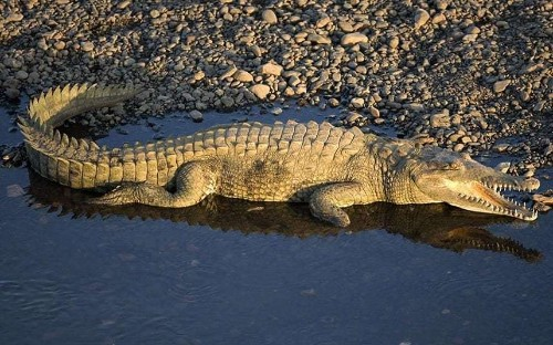 Kayaker rescued after being stranded for four days following crocodile attack
