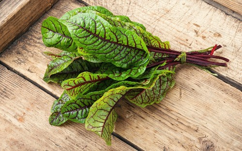 Sow sorrel now for an easy, good-looking and tasty herb