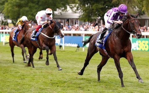 Ten Sovereigns can become Champion sprinter at Coolmore Nunthorpe Stakes