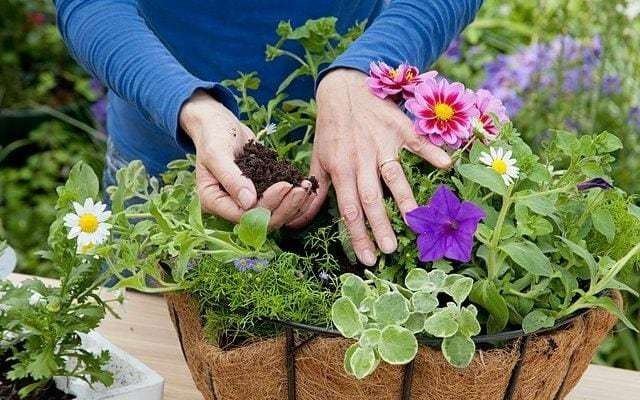 Jobs to do in the garden over Easter weekend