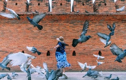 Tourists in Thailand are paying people to scare pigeons to create the perfect Instagram shot