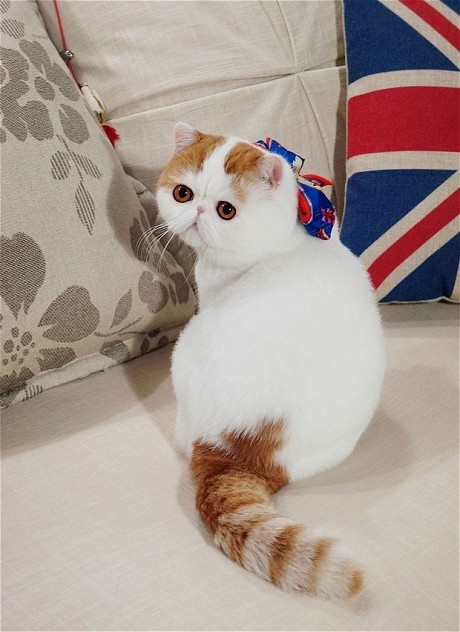 Cute cat or ugly cat? The new feline from China taking the internet by storm