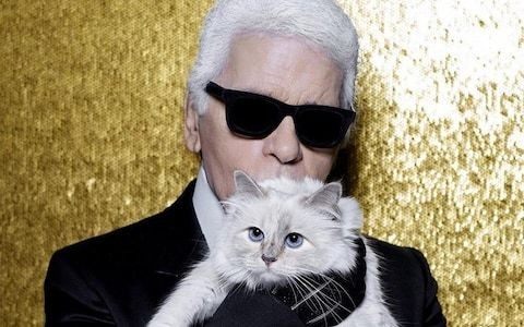 Better an ill-tempered stray cat than Lagerfeld's pampered floof