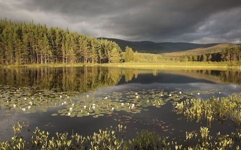 Britain's biggest private landowner says re-wilding Scotland is a 'labour of love'
