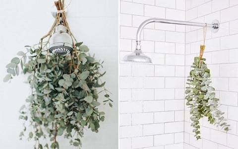 Why you should have a 'eucalyptus shower'