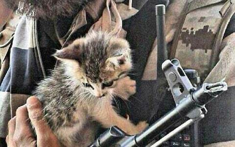 Islamic State using kittens to lure jihadists to fight