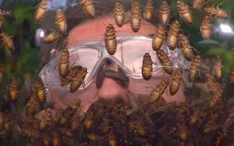 I'm a Celeb criticised by Buglife charity after banning the eating of live insects but allowing contestant to crush them