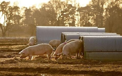 Market report: Chinese demand for pork lifts food producer Cranswick