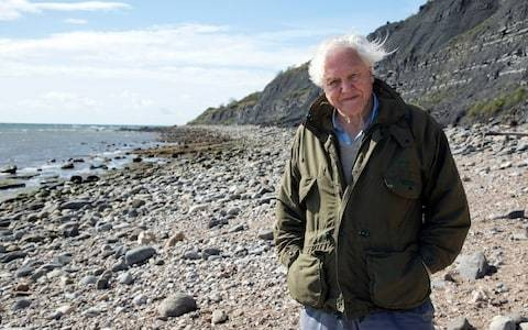 Britain's 'underwater forests' could be key to beating climate change says Sir David Attenborough
