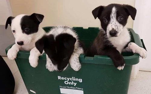 Hero dog sniffs out litter of abandoned puppies during woodland walk