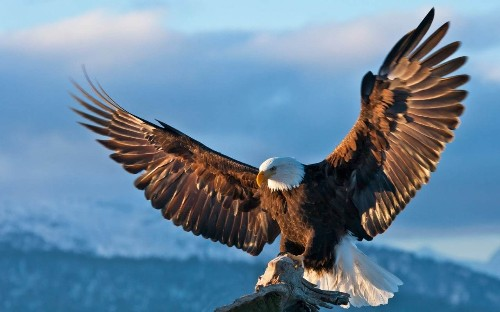 The best cruises for photography, from eagles in Alaska to temples in Bali