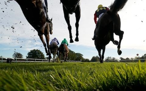 Marlborough racing tips for Thursday, August 22