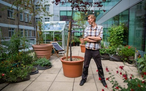 Rooftop farming: how nature flourishes on London's skyline - plus the top 5 edibles for beginners