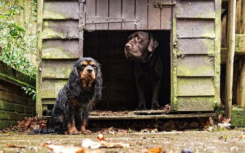 Harry Page's beautiful dog portraits, in pictures - Telegraph