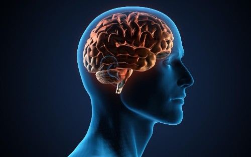 The seven-day brain workout: how to sharpen and fortify your mind