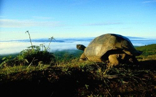Galapagos conservationists celebrate as hotel developers seen off by new nature reserve