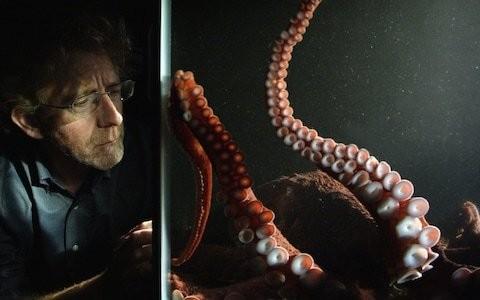 The Octopus in My House: meet the heartbroken scientist behind an extraordinary experiment