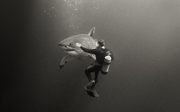 How to conquer a fear of sharks: swim with them