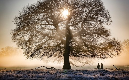 Mind healing: getting through the last days of winter