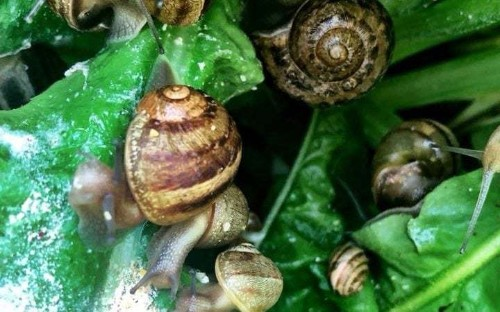 Breeding snails have been deployed by firms to successfully avoid a rise in business rates