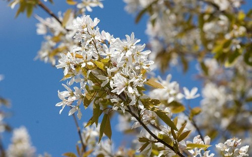 The best trees for small gardens