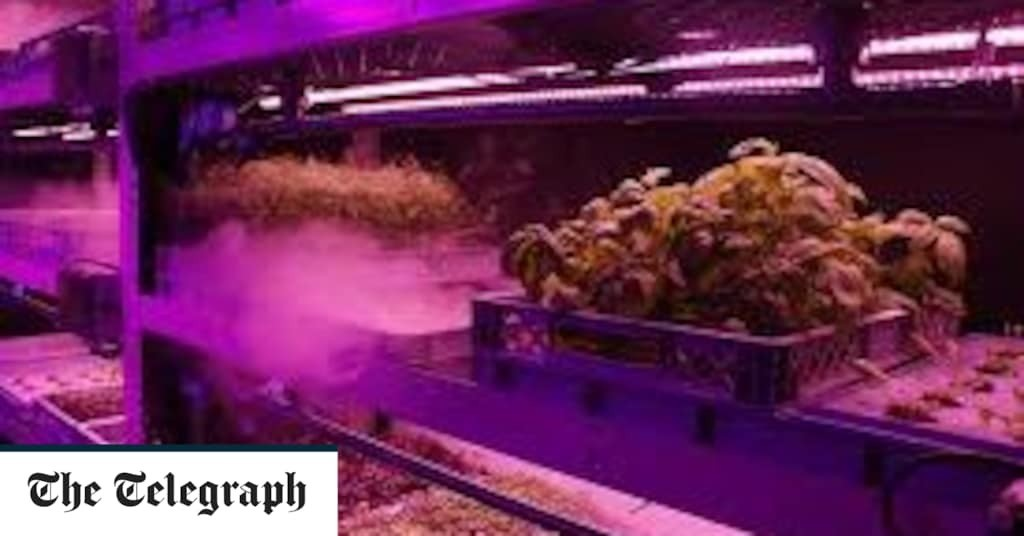 Vegetables to be grown without soil by farmers as nutrient root spray technology rolled out