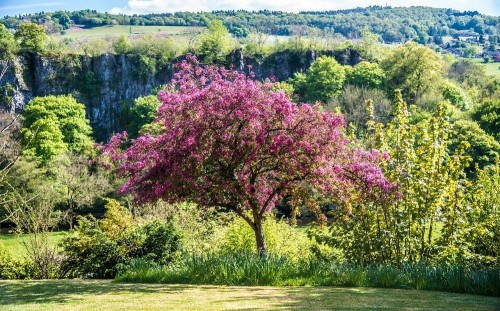 How to care for fruit trees in early winter
