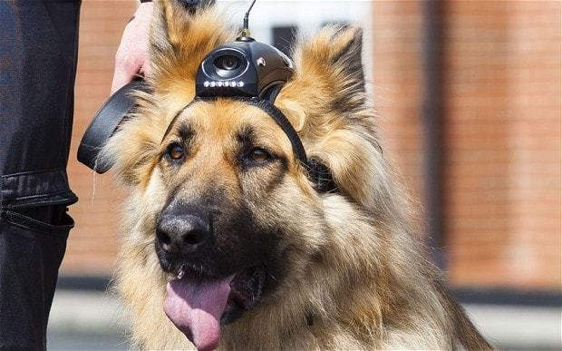 Pensions for police dogs