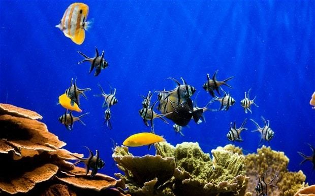 Fish tanks lower blood pressure and heart rate