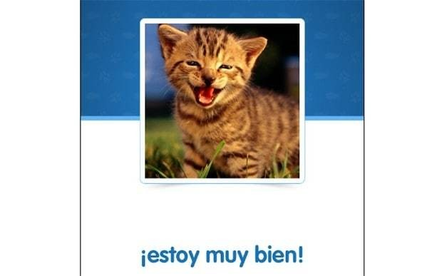 How cats can help you learn Spanish