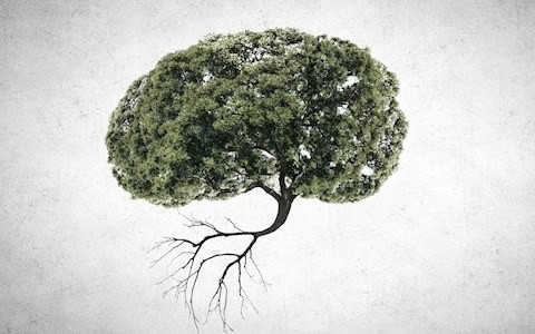 Do trees really help to keep our brains healthy?