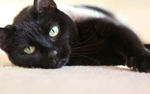 Black cats are for life - not just for selfies