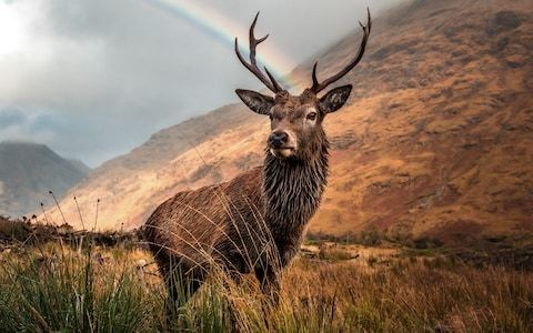 Proposals to reduce Scotland's wild deer population would create culling 'free-for-all' gamekeepers warn