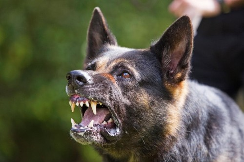 Man stabs dog to death after it attacked his wife