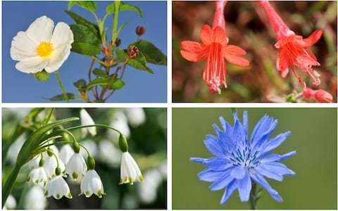 20 tough-as-boots plants ready for any weather