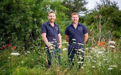 How to make your garden a haven for butterflies, with help from the 'Butterfly Brothers'