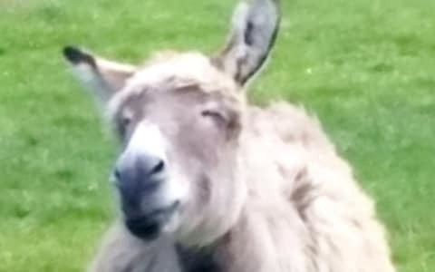 Beloved 'Blackheath Donkey' stabbed in suspected 'gang initiation' attack