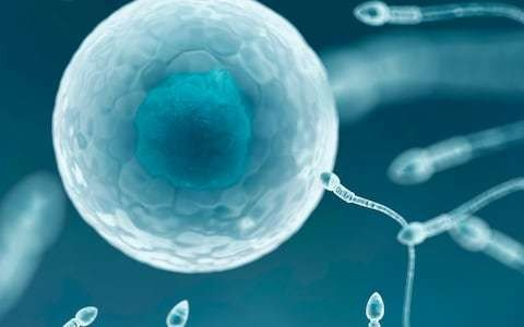 The male fertility crisis: six things that are harming your sperm count