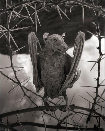 Nick Brandt's 'Petrified': animals of Lake Natron - Telegraph